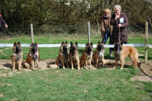 groupe chien